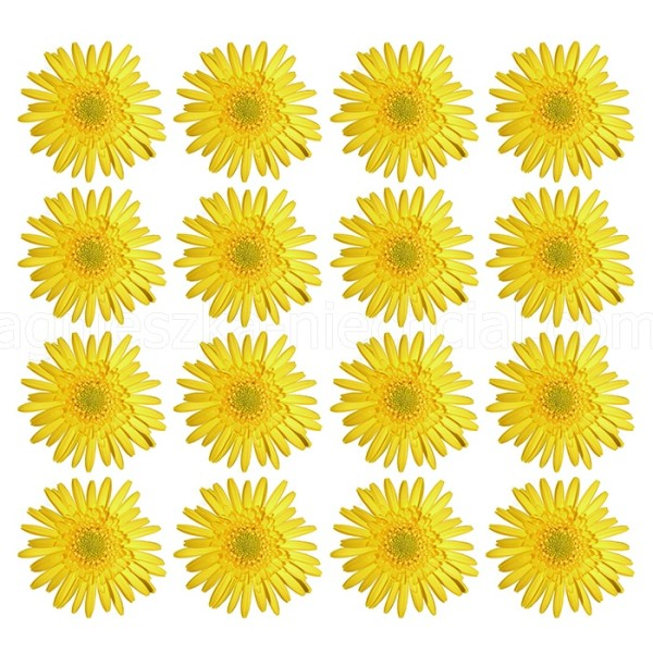 artistic floral composition
