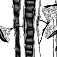 czarno-biały wzór dekoracyjny