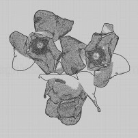 kompozycja graficzna z kwiatami