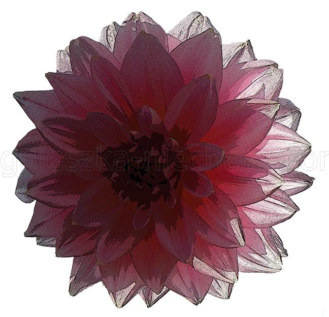 dekoracyjne wzory kwiatowe