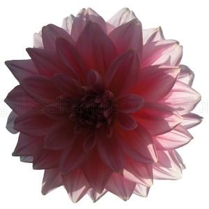 wzór kwiatowy retro