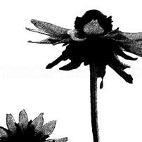 graficzne motywy roślinne