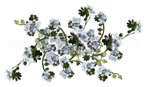 kompozycja kwiatowa